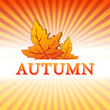 autumn illustration with fall leaves and rays