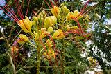 Alogaki Flowers