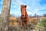 cute pony outdoors on closed pasture