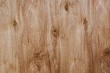 pine plywood texture