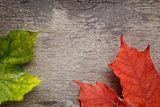 autumn maple leaves on wood surface