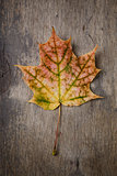 autumn maple leaf on wood surface