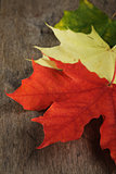 autumn maple leaves on wood surface