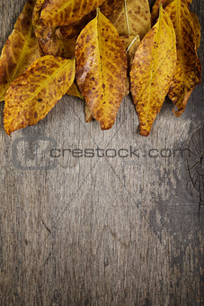 autumn leaves on wood surface