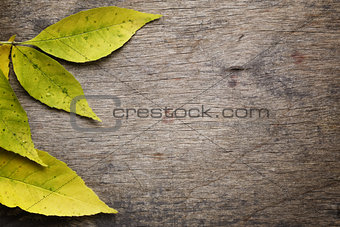 autumn ash leaves on wood surface