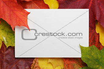 autumn maple leaves on wood surface with paper card