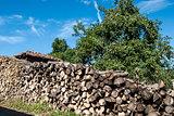 Stacked oak firewood