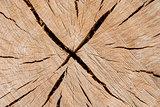 Oak log surface as background