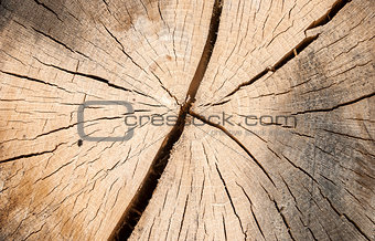 Oak log surface as background
