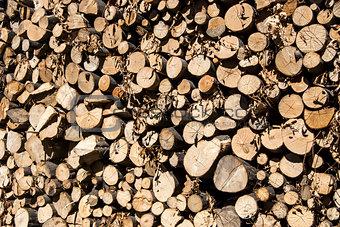 Stacked oak firewood closeup
