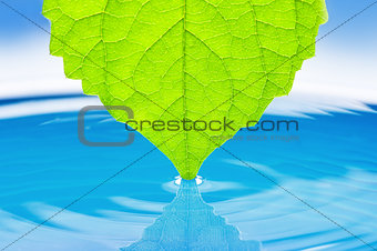 Green succulent leaves for the water
