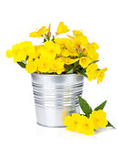 Yellow flowers in bucket