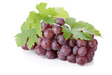 Red grapes with leaves