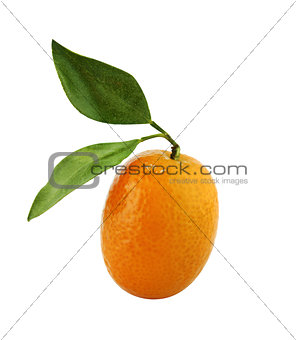 Small Orange Fruit