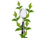 green leaves around Spoon