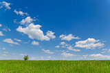 field with green grass under deep blue sky