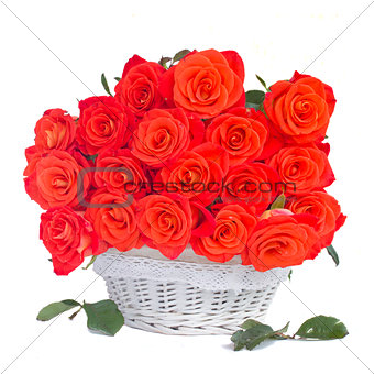 bright orange  roses in white basket