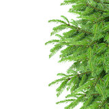 fir tree border