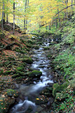Autumnal Creek in Beskydy Mountains