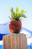 Tropical plant in a red clay pot on the ancient column.