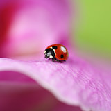 Ladybug on a colorful flower