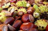 Closeup of horse chestnuts, acorns, beechnuts and cobnuts in aut