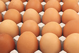 Chicken Eggs row pattern background