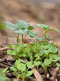 Springtime growth new seedlings emerge