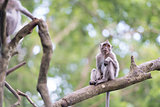 Lonely monkey macaque on tree branch