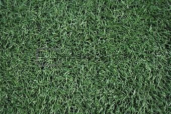 Artificial grass soccer field