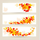 Three autumn banners with colorful leaves Vector