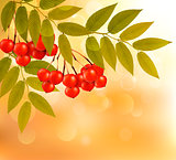 Autumn background with leaves and rowan. Back to school. Vector