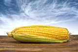 Ear of corn on wooden table