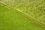 Green meadow diagonal tractor track