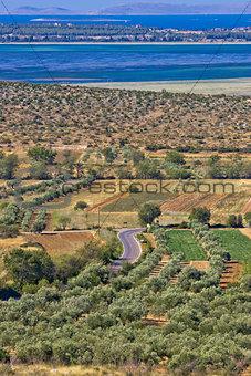 Olive trees grove and Vrana lake