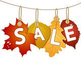 Hanging vector sale with autumn leaves.