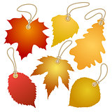 Hanging vector tags with autumn leaves.