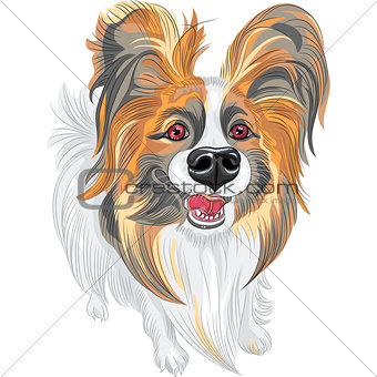 vector pedigreed dog Papillon breed