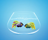 Two Angelfish in fishbowl falling in love