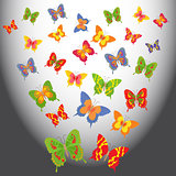 Cartoon butterflies in a light space
