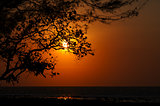 Sunset on the ocean - sun is shining through tree
