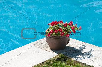 pot in pool