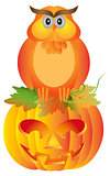Halloween Owl Sitting on Pumpkin Illustration