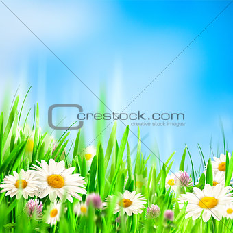 Chamomile symphony. Abstract natural backgrounds for your design