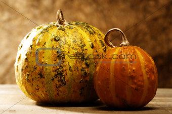 pair of pumpkin over wooden desk, cousine still life