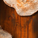 Section of Tree Trunk  - Background