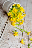 wild yellow flowers in bucket