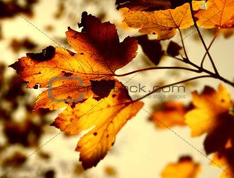 Grunge autumn
