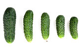 five ripe cucumber