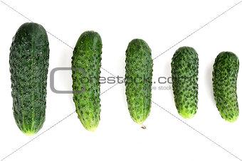 five ripe cucumber
